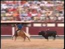 Самый дорогой конь на земле.Мерлин, единственная лошадь в мире которая воспринимает корриду как игру с быком.